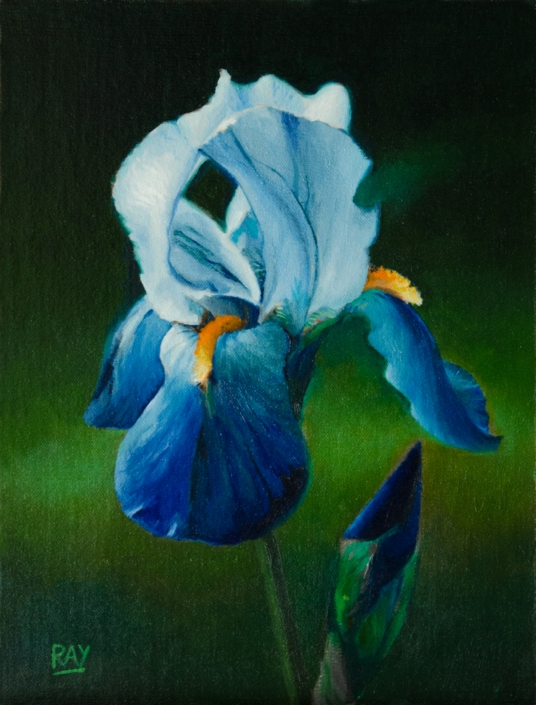 "Alan Douglas Ray"", ""Blue Green Iris Study"", 12"" x 9"", oil on panel, $590"
