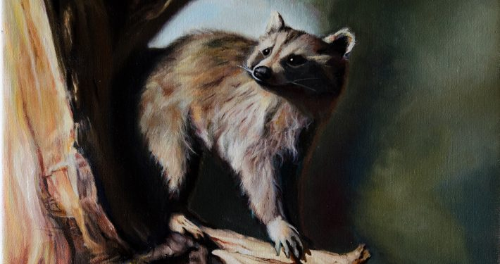 On the Prowl, A Portrait of a Raccoon