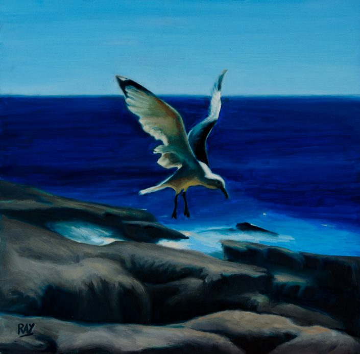 "Alan Douglas Ray, ""Seagull"", 12"" x 12"", oil on panel, $660"